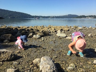 Looking for crabs at Belcarra Regional Park!