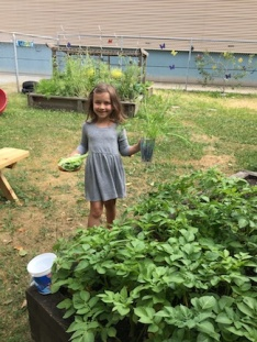 Picking fresh veggies at Emilia's day-care garden.