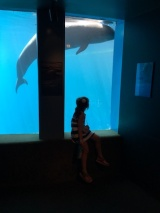 Mesmerized by the false killer whale (actually just a big dolphin)